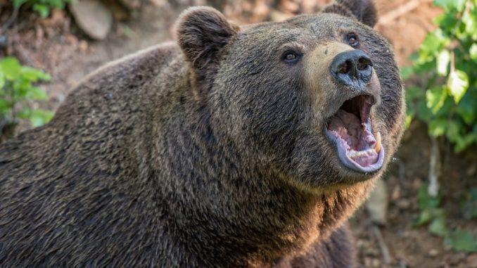 5 Kryptowährungen starben während des Bärenmarktes 2018