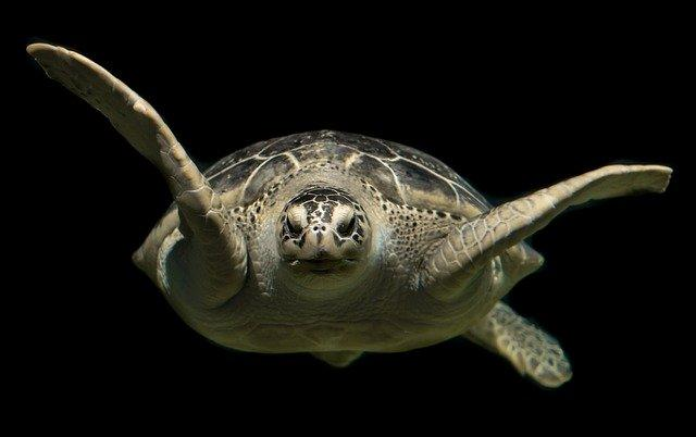 turtle money photo