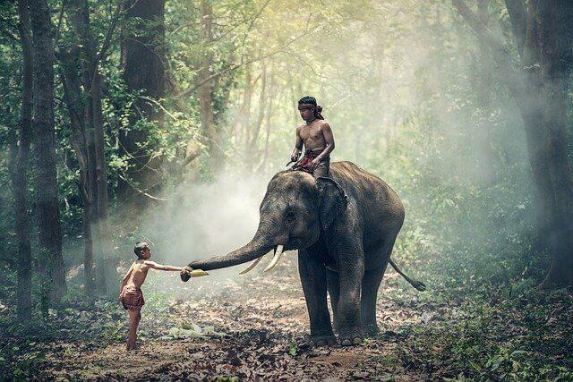Indien photo