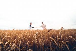 two persons standing on wheat field