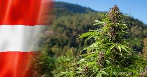 Cannabis in Österreich