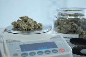 Bewertungsrisiko bei Cannabis Aktien