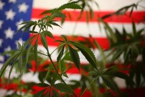 Cannabis in den USA