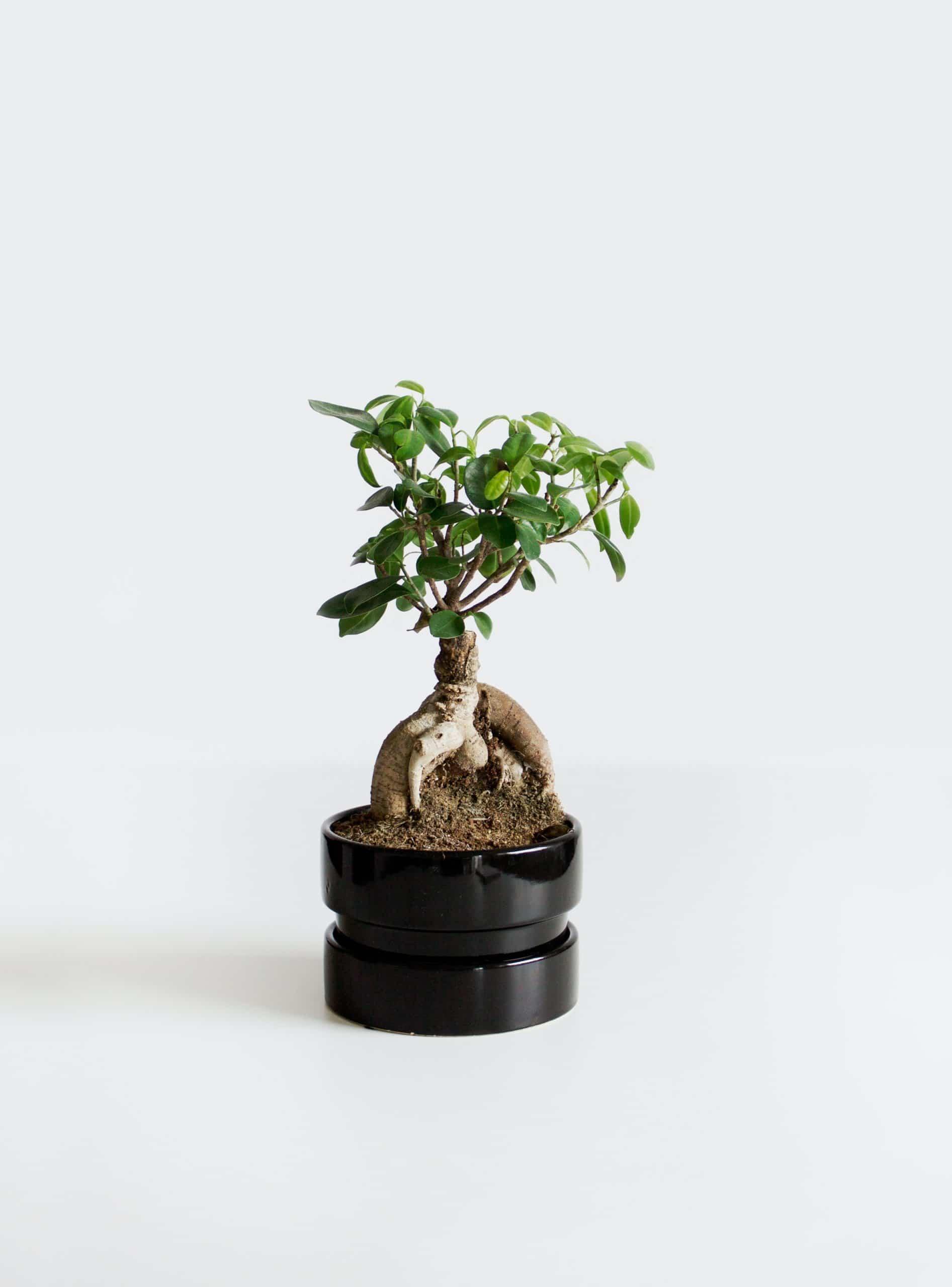Bonsai Investment