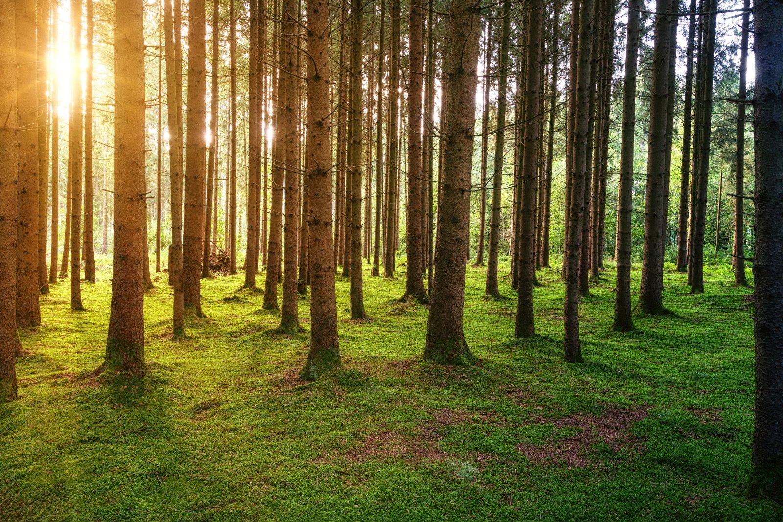 In Wälder investieren