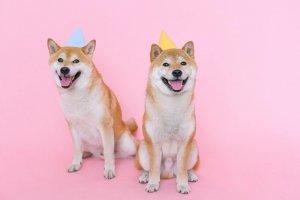 Shiba Inu & Floki Inu starkes Kurs-Plus! FLOKI jetzt drittgrößter Meme-Coin nach DOGE & SHIB